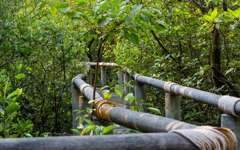 Mangrove Forest Facilities at Samanea Beach Resort in Kep