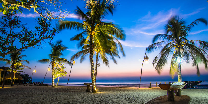 Coconut Trees in Kep