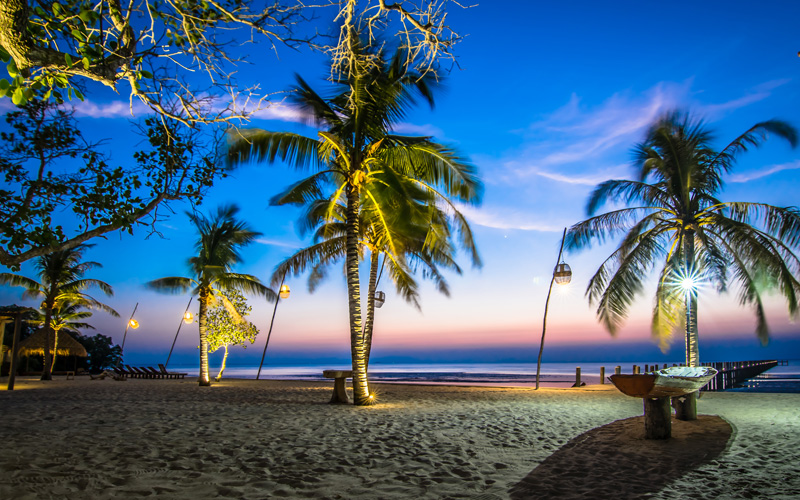Coconut Trees in Kep Gallery