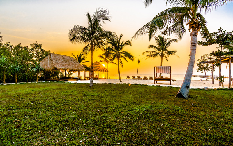 Coconut Trees at Sunset in Kep Gallery