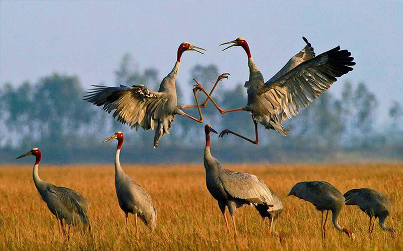 Anlong Pring Crane Bird Sanctuary