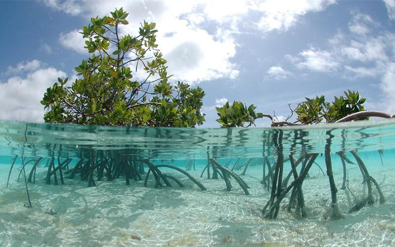 Mangrove Forest Discover Kep Samanea Beach Resort