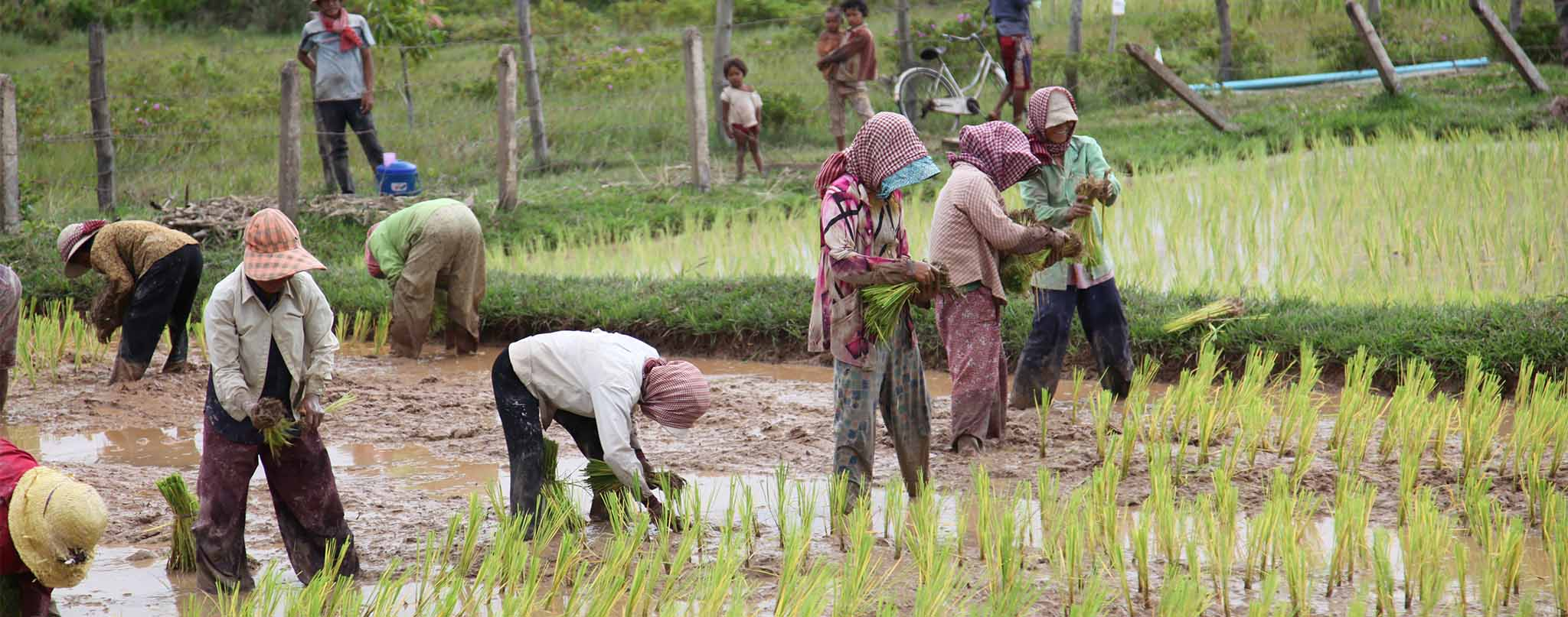 rice fields salt trip tour kep cambodia Excursions Activities